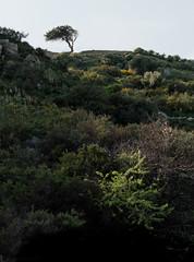 323_3792 (smülli) Tags: kreta crete hellas island mittelmeer mediterranian griechenland