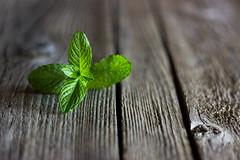 Mint (annfrau) Tags: mint menta stilllife table green verde tavola focus canon50mmf18stm canoneos600d
