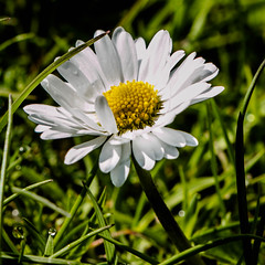 Vårkänslor / spring feelings Fotosöndag (camillagarin) Tags: fotosondag fs170416 varkanslor