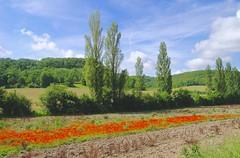 """Les coquelicots, belle note de gaité dans ce beau paysage! Lot et Garonne  """"France"""" (josianelavielle) Tags: nature arbres coquelicots"""