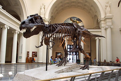 "Sue the Tyrannosaurus Rex • <a style=""font-size:0.8em;"" href=""http://www.flickr.com/photos/34843984@N07/14919926763/"" target=""_blank"">View on Flickr</a>"