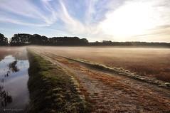 mist on the bog (marie palcic) Tags: water berries capecod massachusetts cranberry coastal cape bog