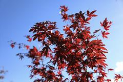 Maxwellton Park Autumn Colours (4) (dddoc1965) Tags: park blue autumn trees sky plants grass clouds scotland photographer sunny seeds paisley leafs hoya plats davidcameron nd1000 maxwellton dddoc positivepaisley