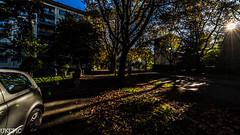 autumn sun III (Ukelens) Tags: city morning light sun lights schweiz switzerland town swiss stadt bern sonne sonnenaufgang morgen sunbeam lightroom ligh sonnenschein wankdorf berncity ukelens