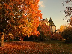 Neighborhood Color (Bill VanderMolen) Tags: autumn fall fallcolor michigan victorianhouse iphone iphone5c