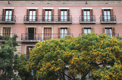 And they're standing there, looking at me. (Mona - B) Tags: barcelona street trees windows summer brick architecture canon outside spain balcony curtain catalonia elevation espagne rideau faade ouverture fentres volet