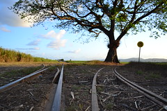 Choose Your Own Adventure (tahufan1000) Tags: road blue sky tree love cane train day shot cloudy north tracks first 15 fork just queensland fields another far sugarcane