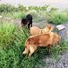 We eat grass! (K e v i n) Tags: morning arizona dogs outside lucy desert az molly xavi sonorandesert newriver eatinggrass hipstamatic lowylens blankofreedom13film