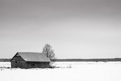 Coldness Of February (k009034) Tags: blackandwhite white house snow black cold tree nature beauty field barn rural forest finland outdoors day space air north skylight scenic meadow scene freeze environment birch idyllic distant in ruralscene barnhouse beautyinnature 500px cloudspace matkaniva