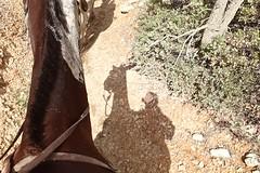 P9080531 (bluegrass0839) Tags: canyon national hoodoo bryce zion zionnationalpark brycecanyon nationalparks narrows hoodoos horsebackride parkthe