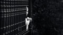 Lean out (Hernan Piera) Tags: park parque blackandwhite baby game blancoynegro girl smile photography photo bars foto photographer chica play image pic nia laugh jugar sonrisa fotografia nena juego leaning imagen fotografo rejas reir asomada hernanpiera