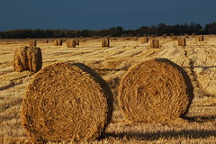 October 7, 2014 (Jeannette Greaves) Tags: autumn trees fall home colours bales 2014 deerood