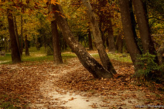 Follow the path (kyrsos1) Tags: park wood autumn tree fall leaves forest wooden leaf path greece macedonia timeless serres makedonia     ilobsterit