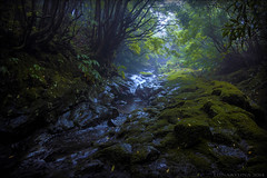 By the sacred grove where the waters flow ... (lunaryuna) Tags: water forest islands darkness secret azores horta mosses mountainstream forestinterior