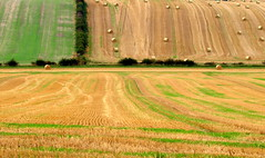 Fields in Northumberland (Tony Worrall) Tags: county uk england beauty grass lines landscape countryside nice scenery place farm country north scenic visit scene location northumberland haystacks area fields hay bales rolling attraction farmed ©2014tonyworrall fieldsinnorthumberland