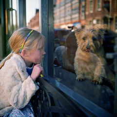 Untitled (polarisandy) Tags: portrait england people dog pet colour film window girl rolleiflex mediumformat square aperture flickr north 66 cumbria squareformat fujifilm analogue carlisle planar twinlensreflex envi