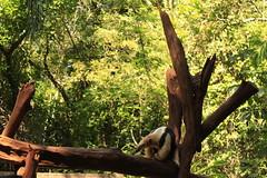 tamandu (sandnfoam) Tags: brazil paran animal forest itaipu fozdoiguau sooc canoneosrebelt1i