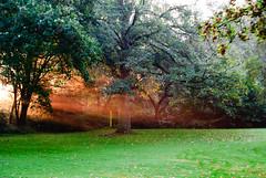 03.10.2014/4 - Licht (grasso.gino) Tags: park morning trees light sun nature germany deutschland licht early natur nrw mystical sonne bume morgen mystisch frh recklinghausen erlbruchpark