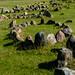 Viking Burial Stones near Aalborg, Denmark