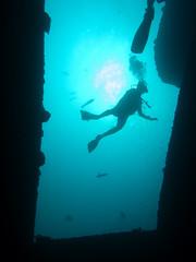 Maldives 2014 (bowsawblogger) Tags: woman fish man animals coral canon sand honeymoon indianocean scuba rubber fantasia snorkelling bsac scubadiving diver padi reef maldives wetsuit 2014 g16 shorediving scubatravel livaboard scubascuba neopreane canong16