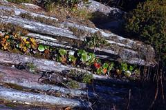 Hawksbill Mountain 2014-1017-42 (LostPineJim) Tags: autumn fall northcarolina linvillegorge burkecounty hawksbillmountain