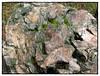 "La forêt pétrifiée • <a style=""font-size:0.8em;"" href=""http://www.flickr.com/photos/79121457@N02/15436861486/"" target=""_blank"">View on Flickr</a>"