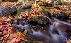 Brook in NEK, Vermont (Nick DiRico) Tags: fall leaves river nikon vermont brook autmn d5100