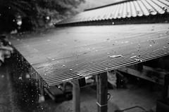 Raindrop of October (harumichi otani) Tags: leica blackandwhite bw monochrome rain japan 35mm blackwhite october streetphotography summicron saitama monochrom raindrop chichibu leicammonochrom