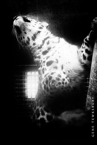 Zoo_0041_11-04-12-tewksbury-Edit