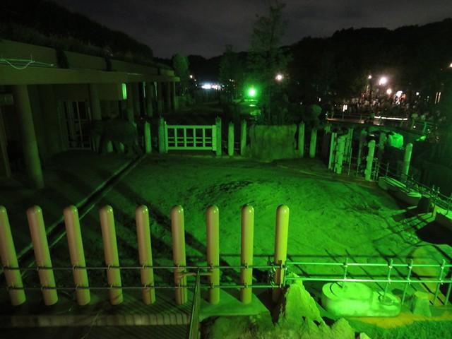 園内は動物たちの姿が見えるように、緑/青などの色でライトが。|名古屋市東山動植物園