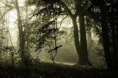 Misty South Cave Woodland Walk 1 (Tim Glidden) Tags: autumn light mist tree fall misty woodland mood yorkshire foggy rope swing ethereal mysterious hull tarzan treeswing southcave flickrfriday mistandfog fickrfriday nikond5100