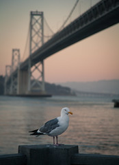"""Bay Bridge At Dusk • <a style=""""font-size:0.8em;"""" href=""""http://www.flickr.com/photos/54083256@N04/15522249942/"""" target=""""_blank"""">View on Flickr</a>"""