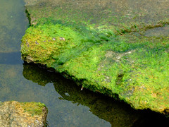 "Slabs of Green Moss on Rocks 2 • <a style=""font-size:0.8em;"" href=""http://www.flickr.com/photos/34843984@N07/15540807272/"" target=""_blank"">View on Flickr</a>"
