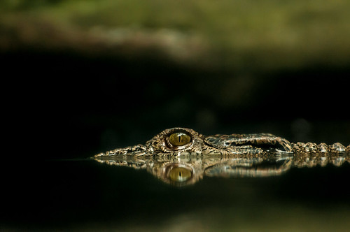 Lurking evil beneath the waters . . . . by 酷哥哥, on Flickr