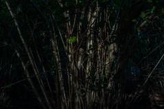 Low sun (EfwEE) Tags: 50mm utrecht f14 sony olympus om zuiko a7 amelisweerd 2014