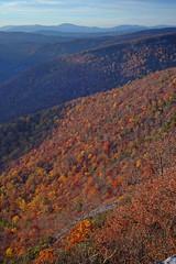 Hawksbill Mountain 2012-1023-131 (LostPineJim) Tags: autumn fall northcarolina linvillegorge pitchpine pinusrigida burkecounty hawksbillmountain