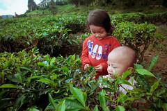 Cameron Highland (sengkenitz) Tags: lilydamia abenoor sengkenitz daliahana irisdafina bibiiklima