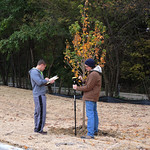 Mapping trees at CPA lot