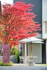 DSC_1702.jpg (d3_plus) Tags: street autumn autumnfoliage sky art fall japan museum scenery shine outdoor  streetphoto   matsumoto nagano   j4         nikon1   matsumotocitymuseumofart  1nikkorvr10100mmf456 1 nikon1j4