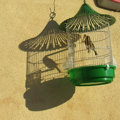 ao sol sem liberdade (Américo Meira) Tags: portugal lisboa ajuda gaiola pássaro sombra luz verde challengeyouwinner