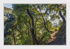 - DSC_1392 (Ferruccio Jochler) Tags: forest vegetation nature wood
