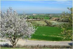 Primavera (Luisa Gila Merino) Tags: primavera flores paisaje landscape spring flowers praderas verde green groen зеленый πράσινοσ grün vert グリーン 绿