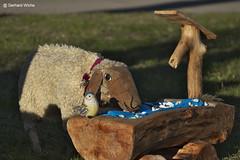 Easter sheep (GerWi) Tags: ostern easter chick kücken couple hasen osterhasen schaf