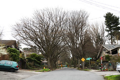 Wow, this amazing and wonderful street leading to the zoo. (Seattle Department of Transportation) Tags: seattle sdot transportation donghochang twitter residential street trees calming chicanes zoo