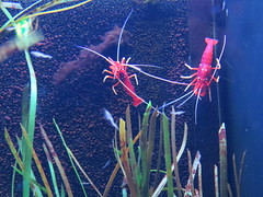 00734934 Aquarium Berlin 1 - 2017 (golli43) Tags: aquariumberlin zoo fische krokodile quallen wasser wasserpflanzen amphibien insekten unterwasserwelt