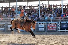 P3110245 (David W. Burrows) Tags: cowboys cowgirls horses cattle bullriding saddlebronc cowboy boots ranch florida ranching children girls boys hats clown bullfighters bullfighting
