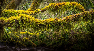 Smothered in Moss.