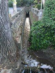 LG (patia) Tags: lg creek