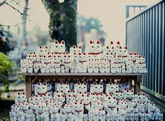 Cats (RunnyInHongKong) Tags: mamiya645protl mediumformat richardphotolabs noritsu mamiyasekor80mmf19 fujiprovia400x posiitve gotokuji japan tokyo film 6x45