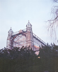 Palmenhaus (nikolaijan) Tags: plaubelmakina 67 plaubel kodak portra800 120 berlin botanical garden film